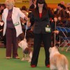 filip_nelson_crufts