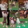 Cleo at Crufts 2009
