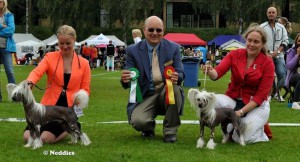 Best of Breed Borås 2013 Prefix Fair Play On Broadway