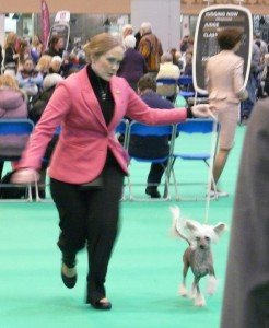 Prefix Abraham Lincoln at Crufts 2013