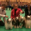 Team Prefix at Crufts 2013
