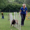Agility training at the Nappers in 2004.