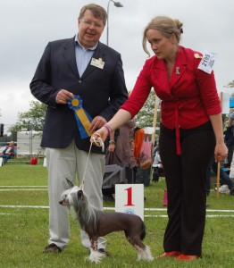 Prefix Chelsea Chick winning her first CAC, 2013