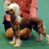 Prefix The Name Of The Game Crufts 2010