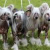 Kennel Prefix BIS breeders group 2013